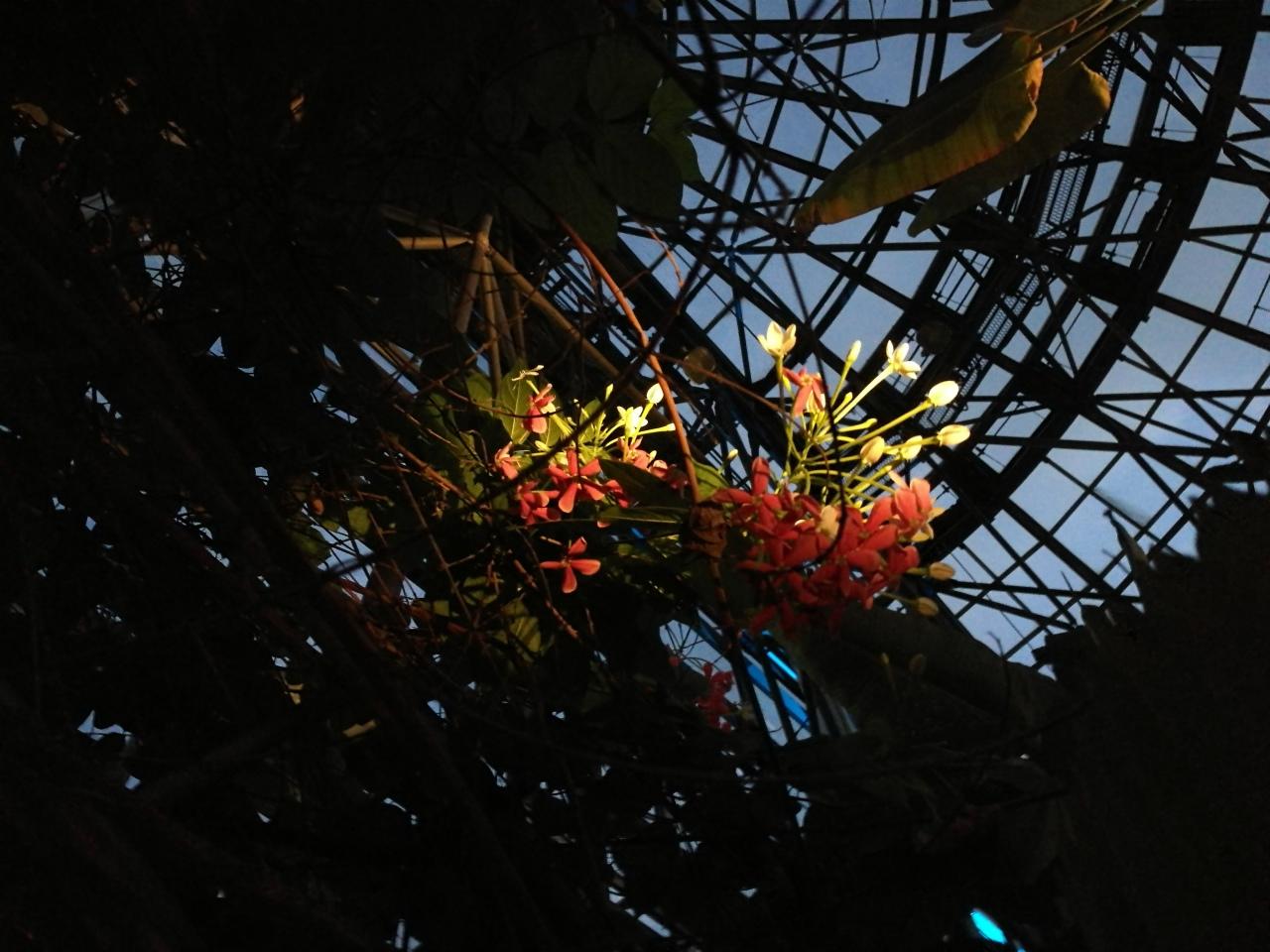 yumenoshima-tropical-greenhouse-dome-2016-05